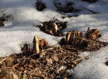 Kwiecień plecień, bo przeplata trochę zimy, trochę lata...