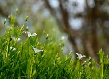 Trawniki w mieście - dlaczego należy je kosić rzadziej - wyjaśniają naukowcy z UWr