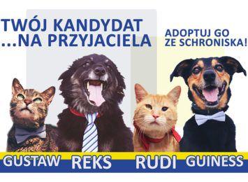 źródło: http://schroniskowroclaw.pl/