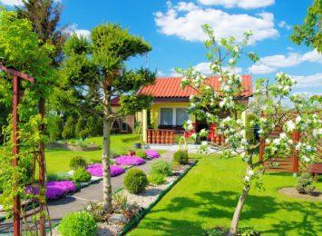BUM na ogródki działkowe! Zielona oaza w czasach zarazy