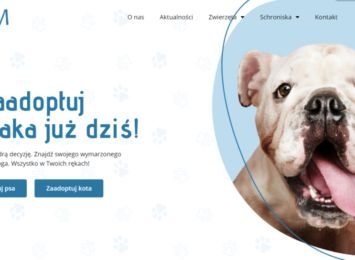 pet-boom.pl - projekt studentów, który ma ułatwić adopcję porzuconych zwierzaków