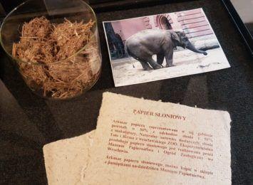 Słonie z Wrocławskiego ZOO pomagają w produkcji papieru