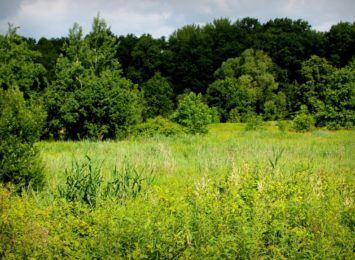 Łąka Kuźnicka: mieszkańcy chcą stworzenia Ekologicznego Korytarza Doliny Ślęzy