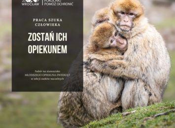 Zostań opiekunem małpek we wrocławskim zoo